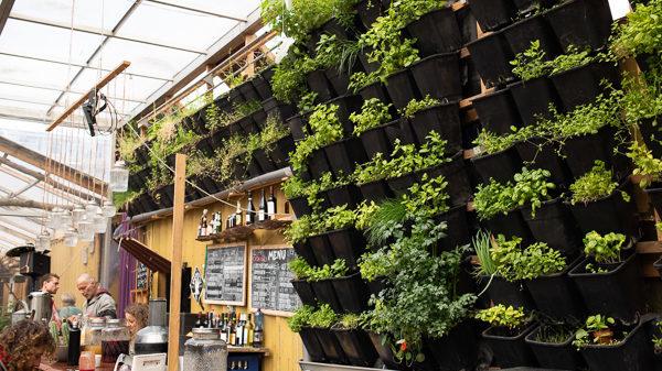 Tientallen zwarte plastic bakken met planten hangen verticaal aan een binnenmuur.