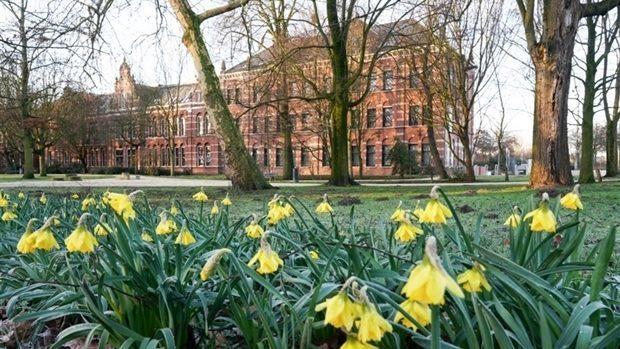 Bloeiende narcissen in het Westerpark (foto: Edwin van Eis)