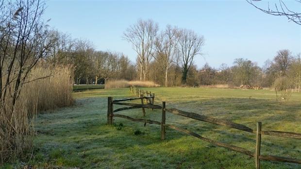 Ecologische koeienwijde in het Vondelpark (foto: Bart Nooy)